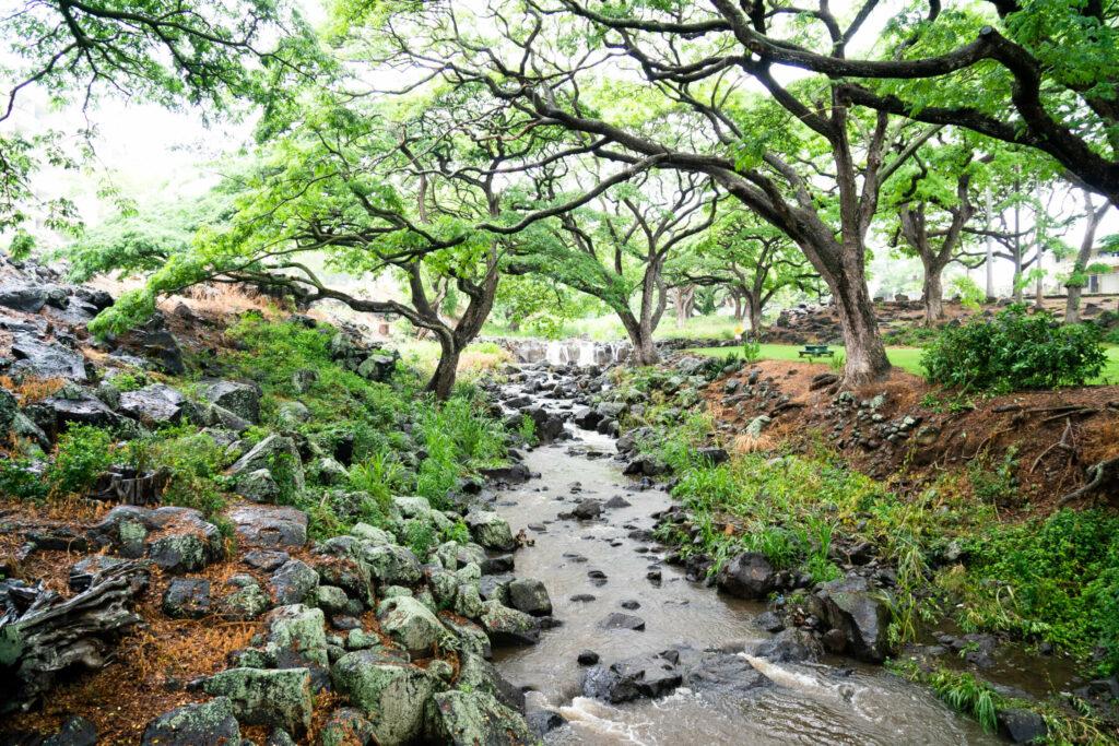 リリウオカラニ植物園