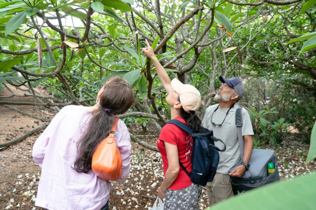 さや状の種をつけた木を発見