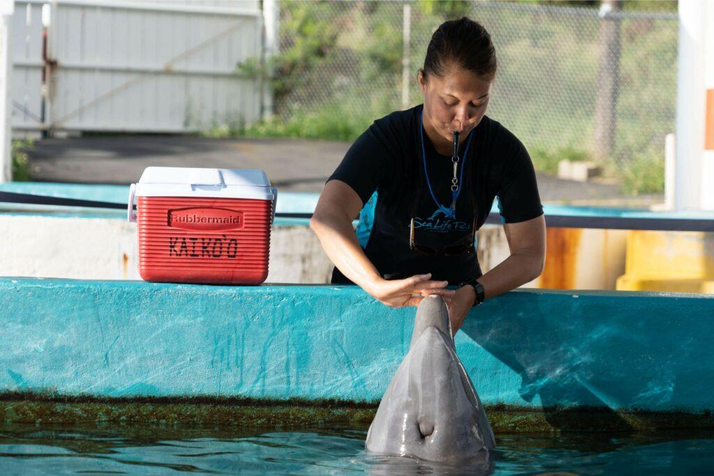 イルカに触れる