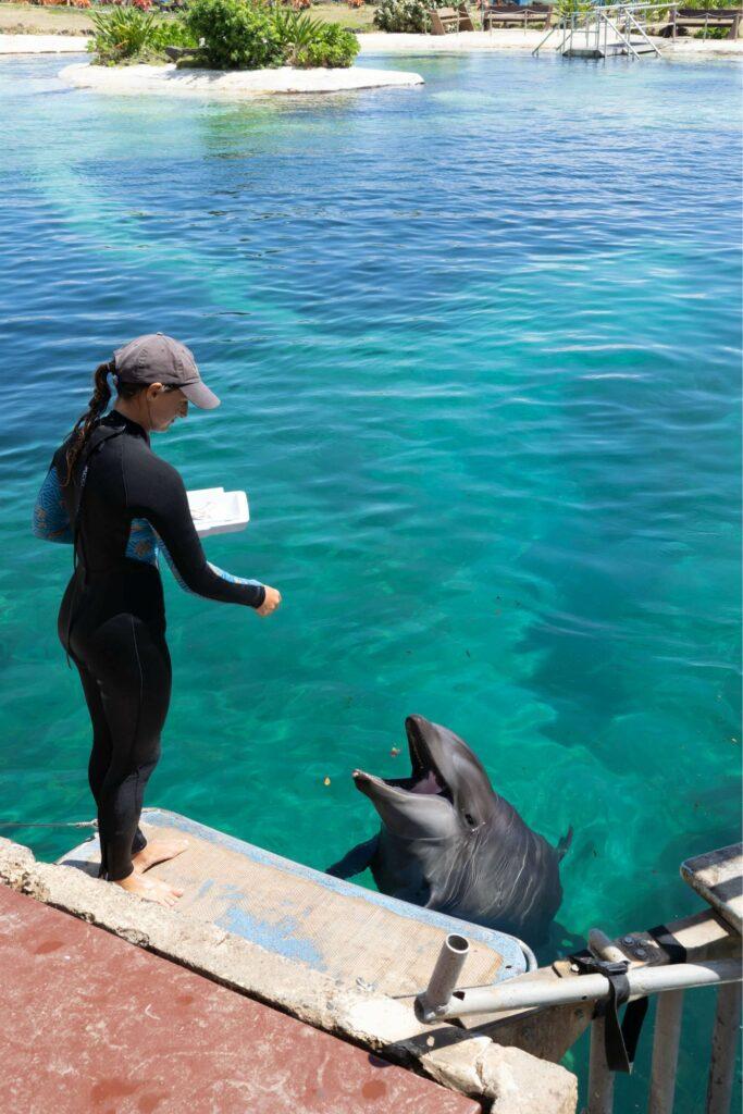 イルカのトレーニング