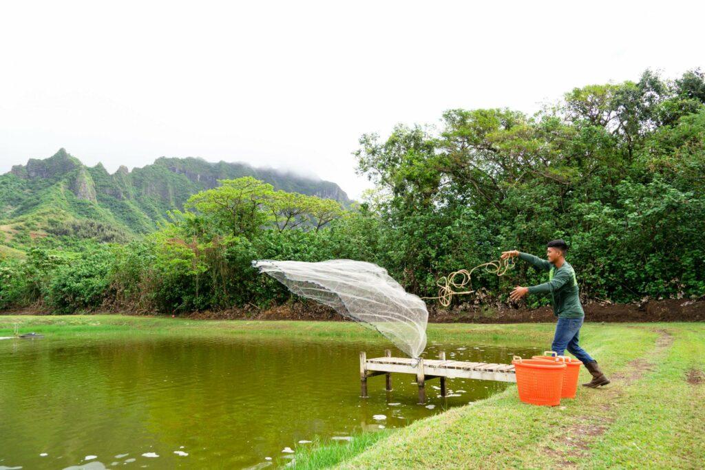 シュリンプ養殖池