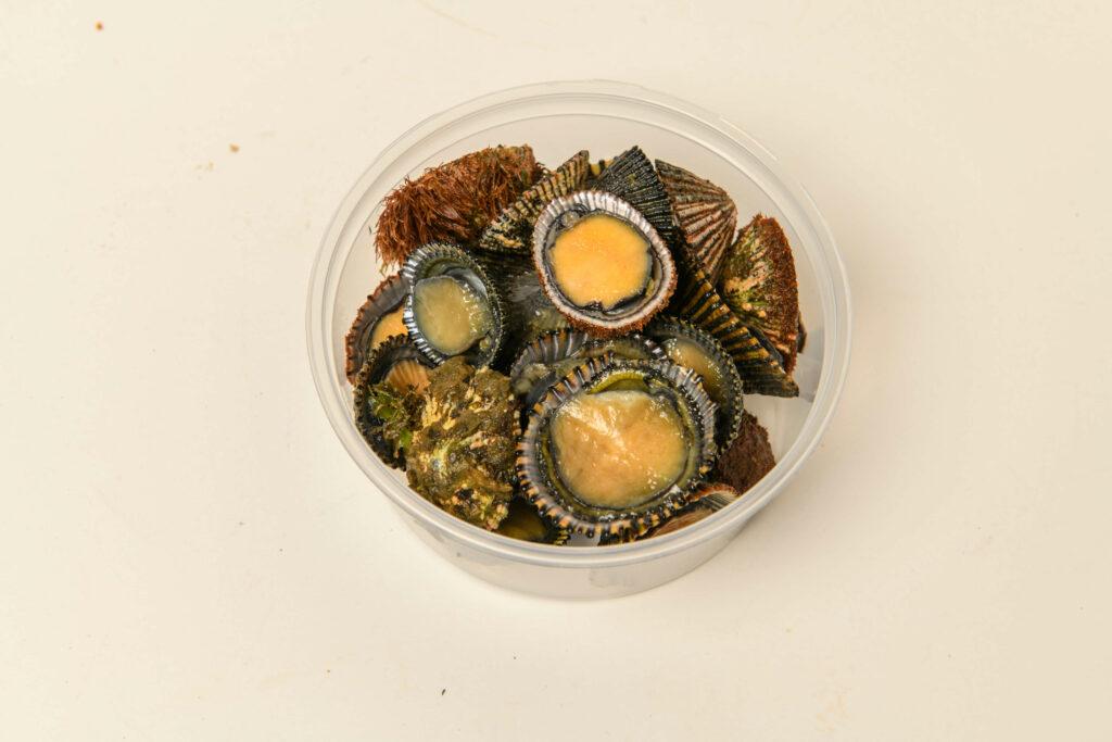 ハワイ固有種オピヒ貝