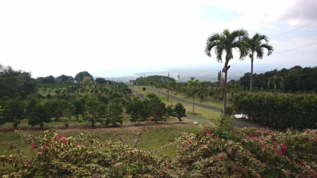 ハワイのコーヒー産地